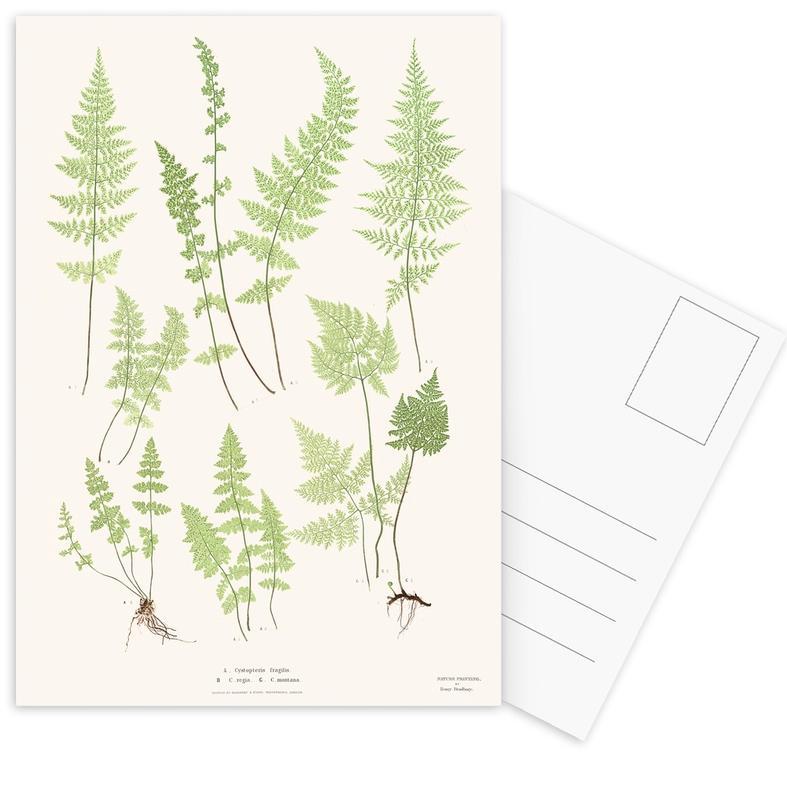Ferns -Postkartenset