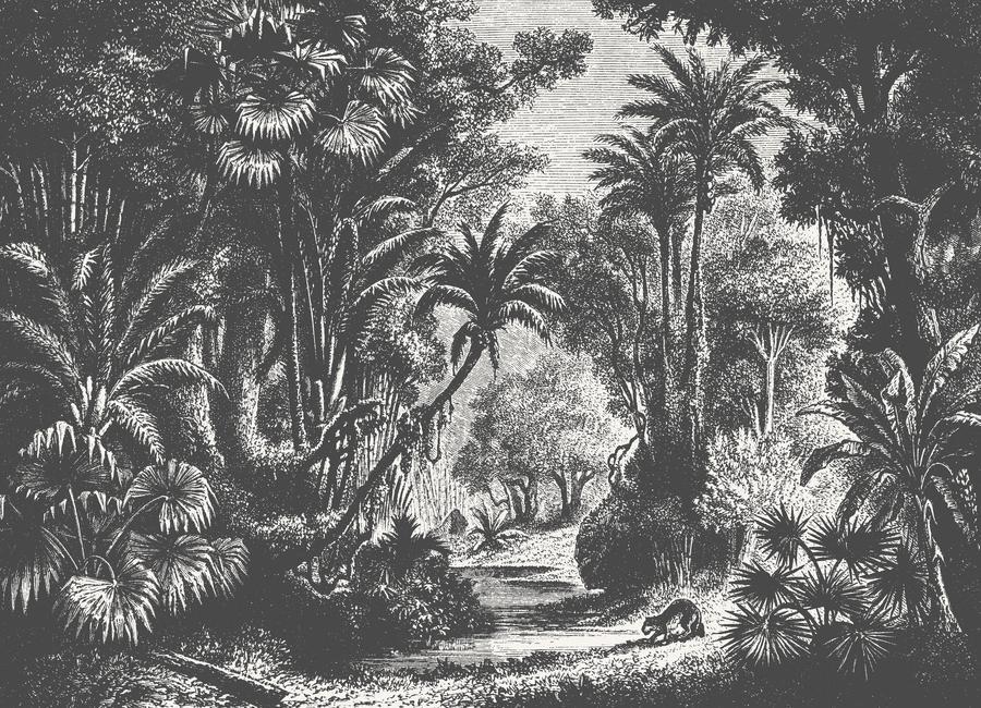 Indian Jungle Canvas Print