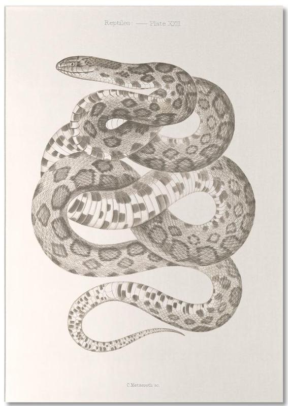 Reptiles - Plate XXII -Notizblock