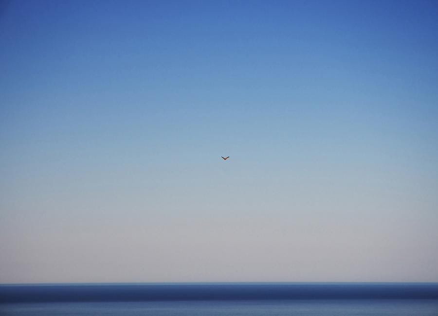 Free Flight canvas doek