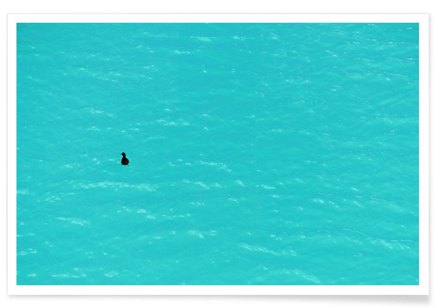 Duck On Water -Poster