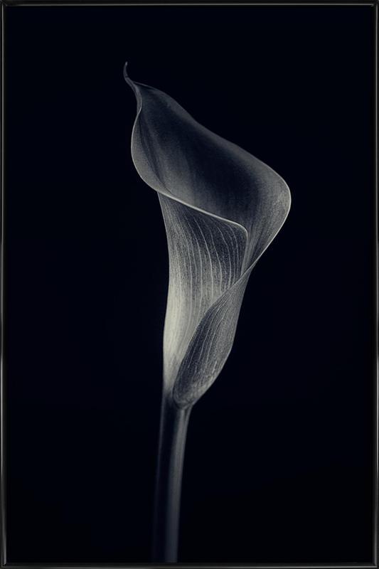 Calla Lily -Bild mit Kunststoffrahmen