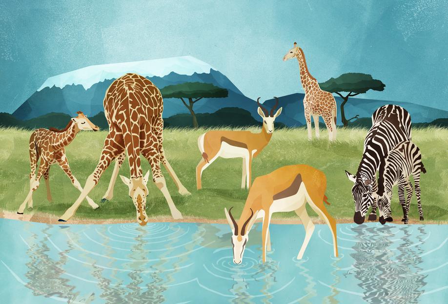 Savanna acrylglas print