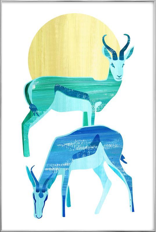 Antilopes in the sun -Poster im Alurahmen