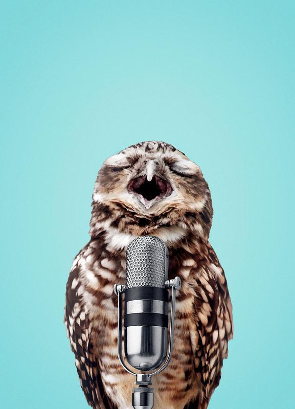 Owl Mic -Leinwandbild