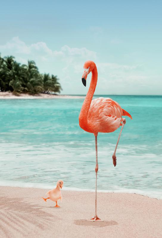 Wannabe Flamingo alu dibond