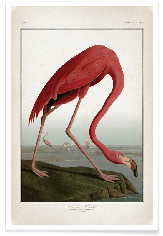 American Flamingo - Audubon Poster