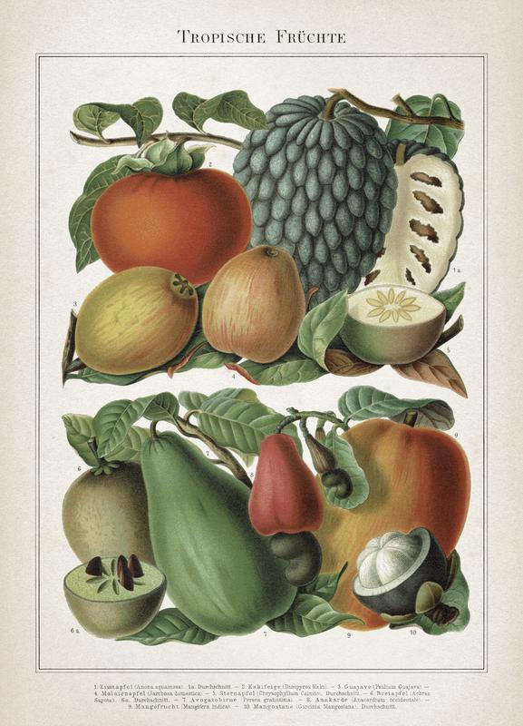Tropische Früchte - Meyers Canvas Print