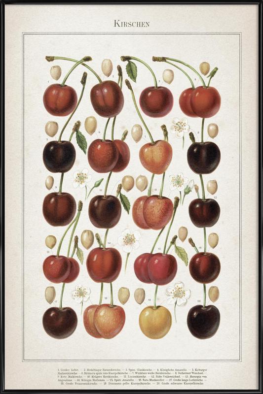 Kirschen - Meyers ingelijste poster