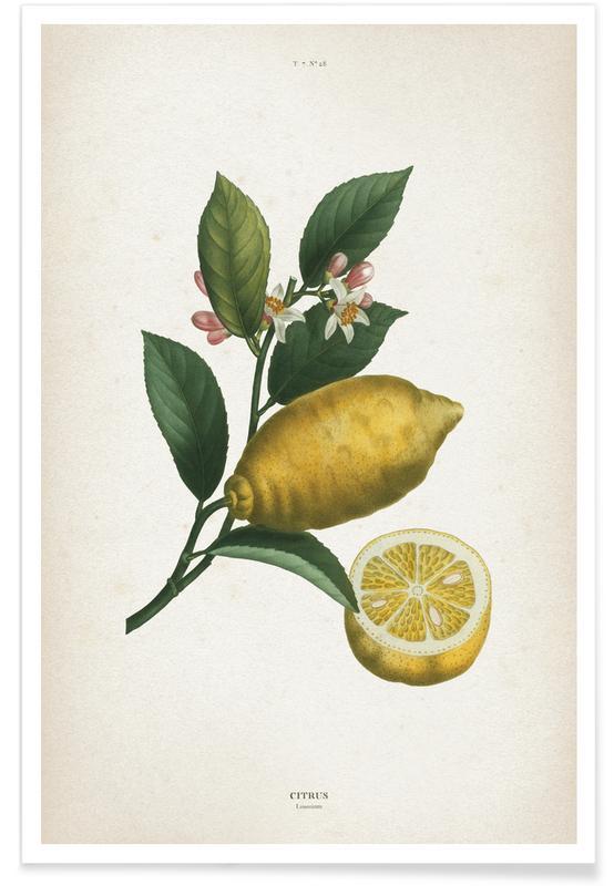 Citrus Limonium - Redouté -Poster