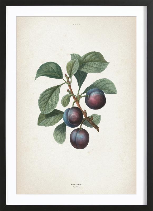 Prunus Myrobalana - Redouté -Bild mit Holzrahmen
