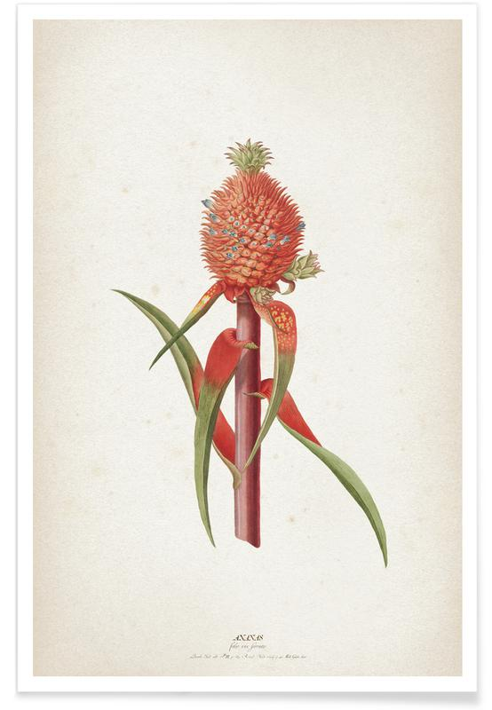 Ananas Folio - Ehret Poster