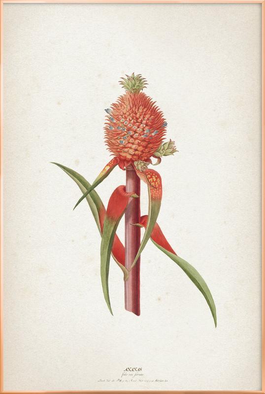 Ananas Folio - Ehret Poster in Aluminium Frame