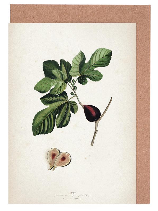 Ficus - Ehret cartes de vœux