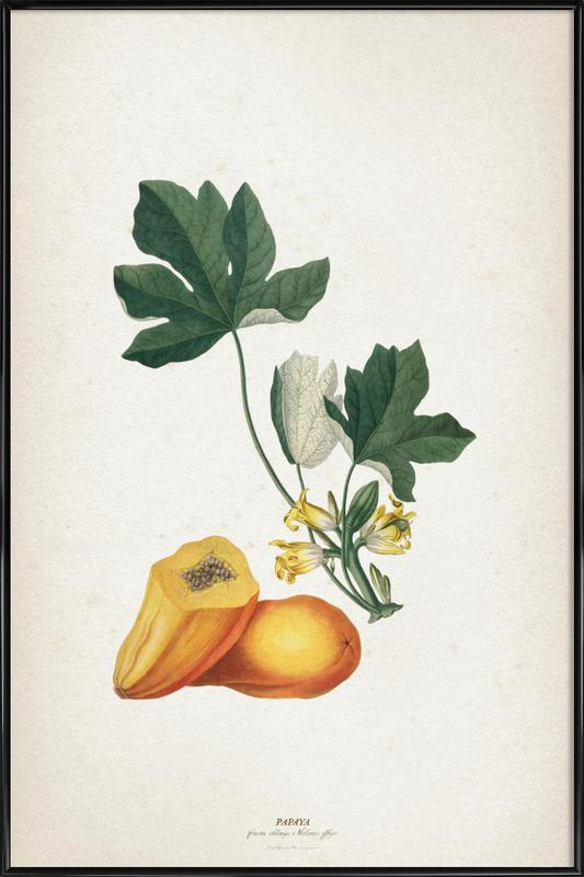 Papaya - Ehret ingelijste poster