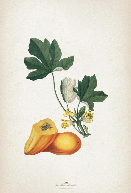 Papaya - Ehret Impression sur alu-Dibond