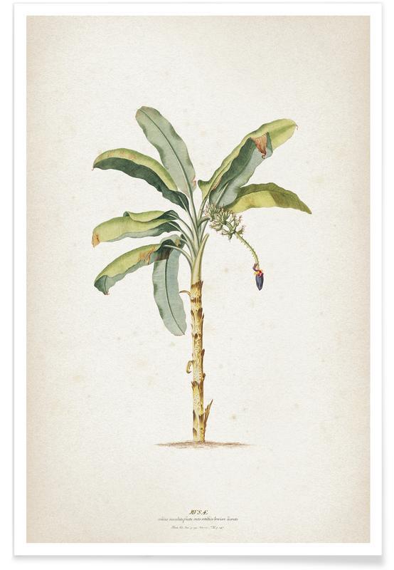 Musae Maculato - Ehret -Poster