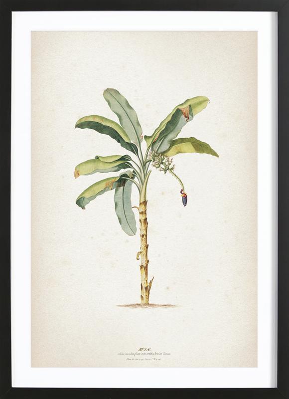 Musae Maculato - Ehret -Bild mit Holzrahmen