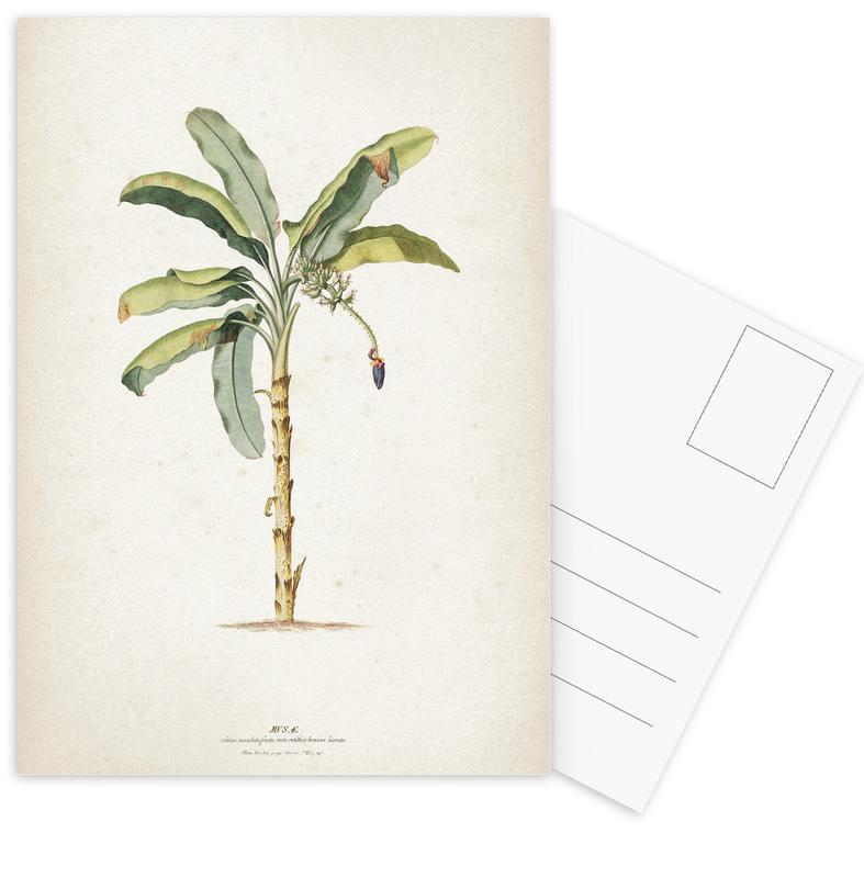 Musae Maculato - Ehret cartes postales