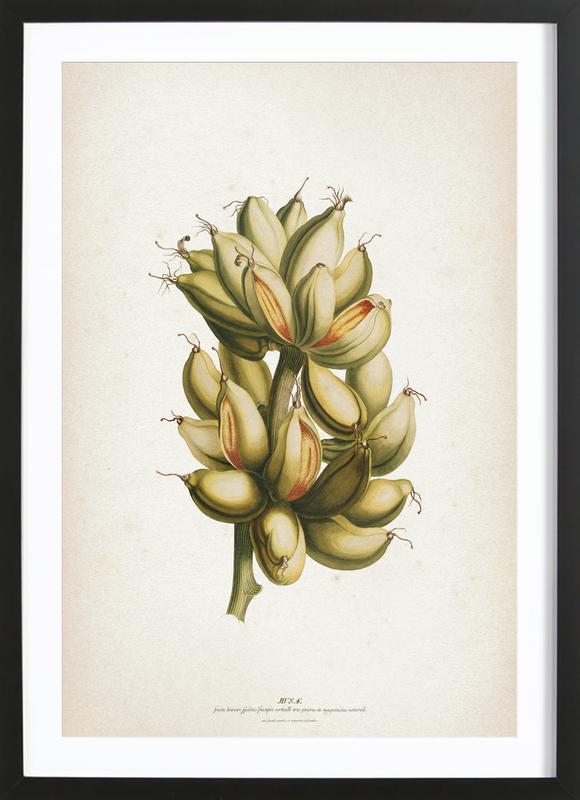 Musae Priores - Ehret Framed Print