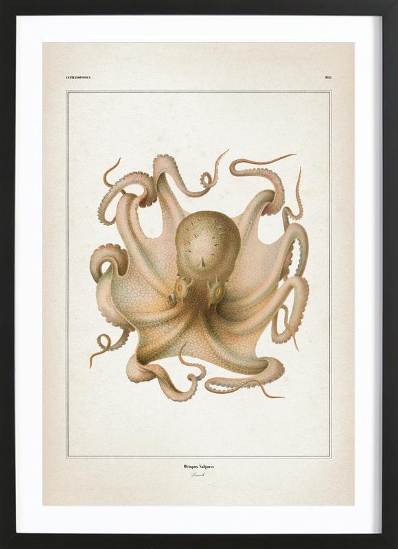 Octopus Vulgaris - Vérany affiche sous cadre en bois