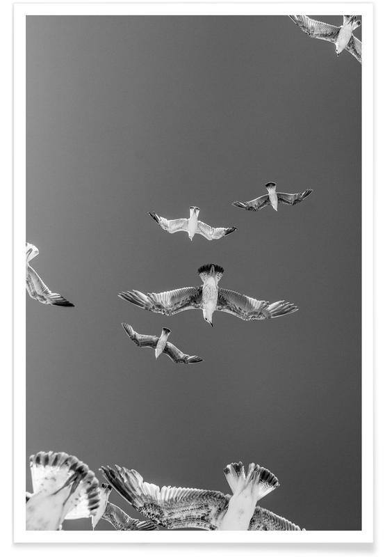 Soaring Birds Poster