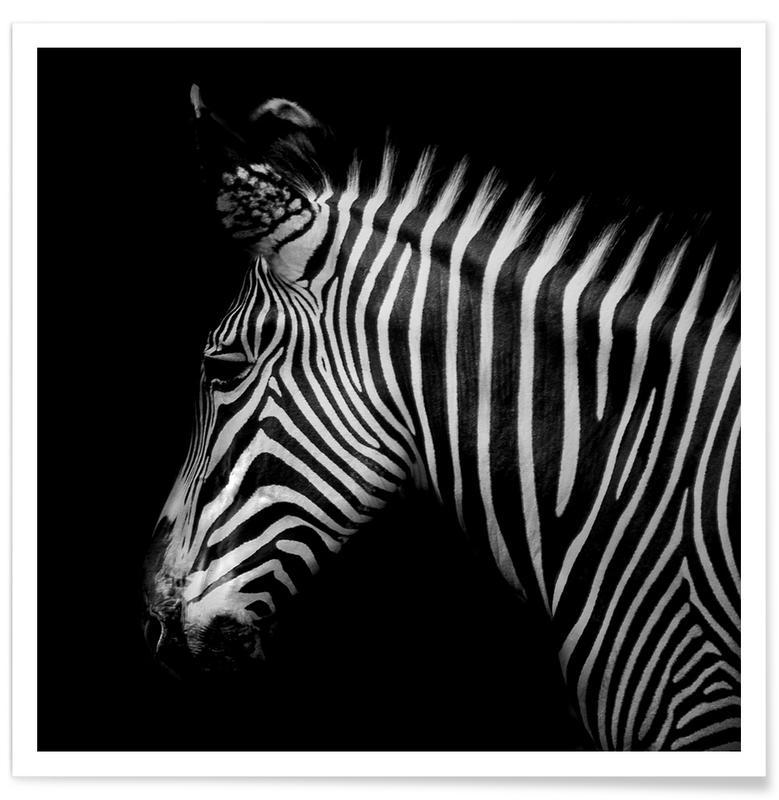 Zebra Profile by Lothare Dambreville Poster