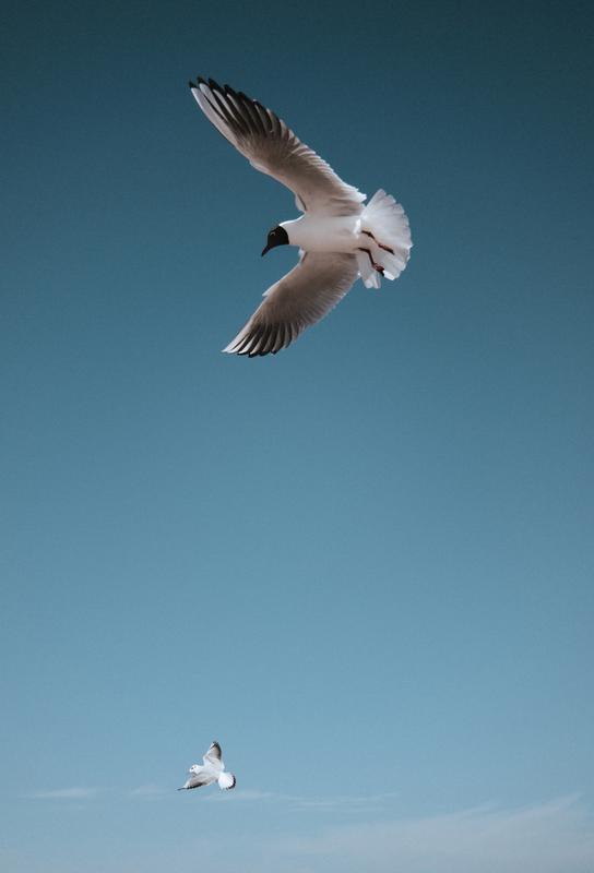 Seagulls I tableau en verre
