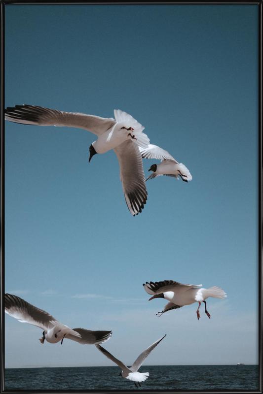 Seagulls II -Bild mit Kunststoffrahmen