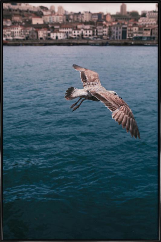 Seagull in Porto -Bild mit Kunststoffrahmen