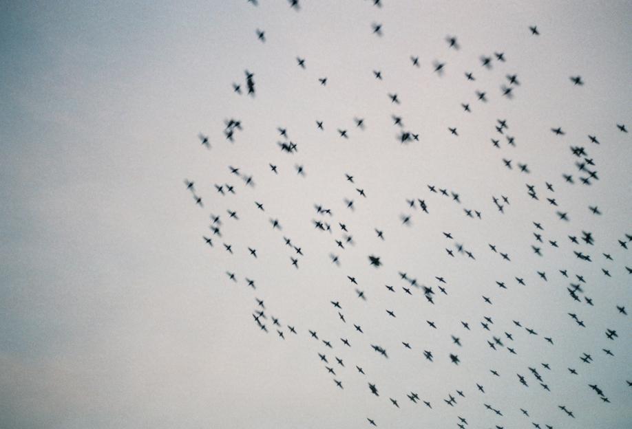 Wild and Free -Alubild