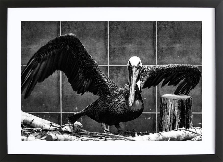 Pelican Portrait -Bild mit Holzrahmen
