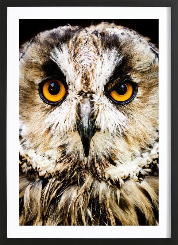 Hedwig -Bild mit Holzrahmen