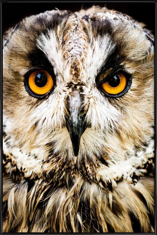 Hedwig Framed Poster