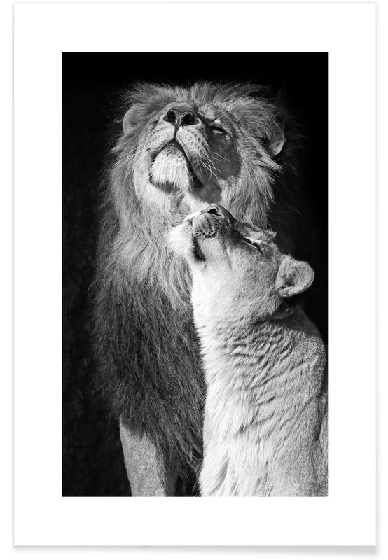 Lions in Love -Poster