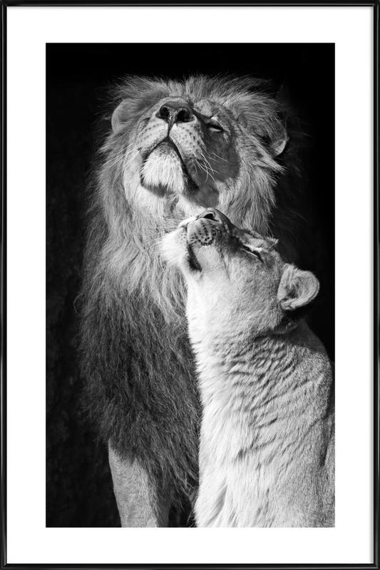 Lions in Love Framed Poster