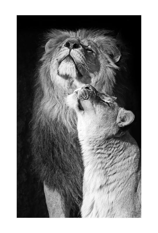 Lions in Love Aluminium Print