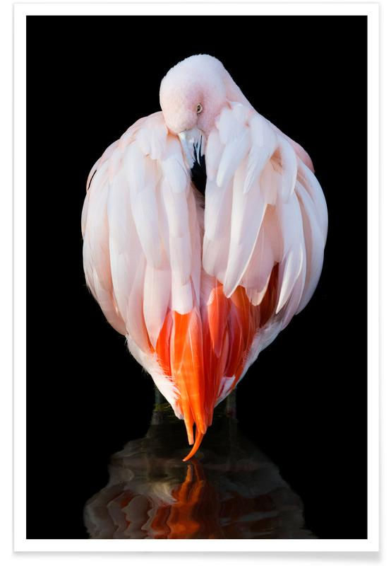 Flamingo in Reflection -Poster