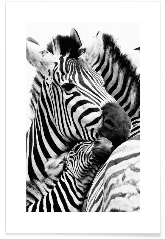 Zebras -Poster