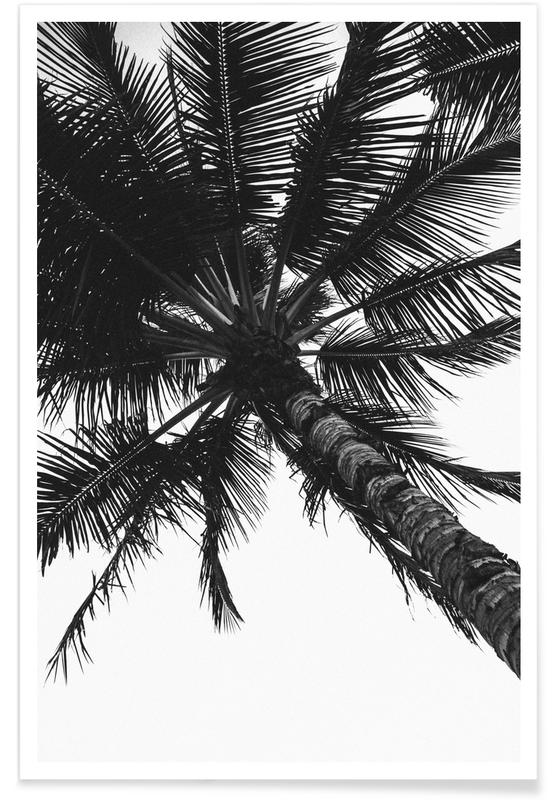 Propeller Palm Poster