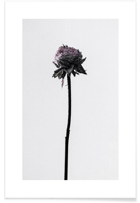 Wilted Flower Poster