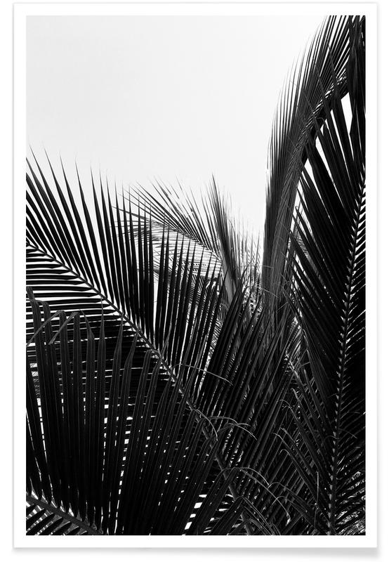 Monochrome Palm Poster