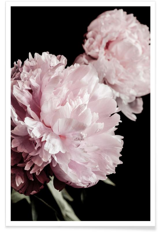 Two Peonies poster