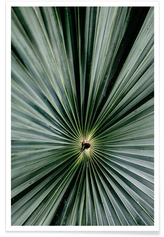 Spiral Palm poster