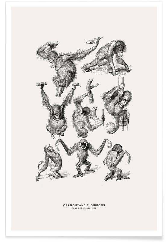 Orangutans and Gibbons Poster