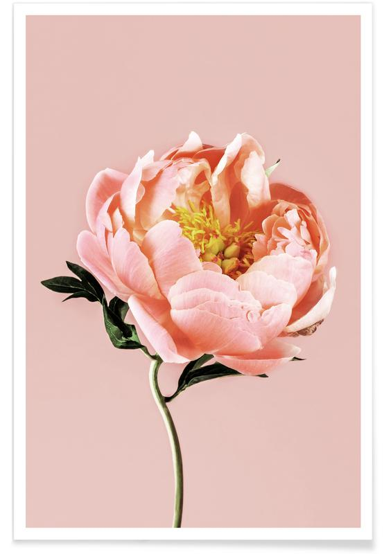 Coral Peony poster