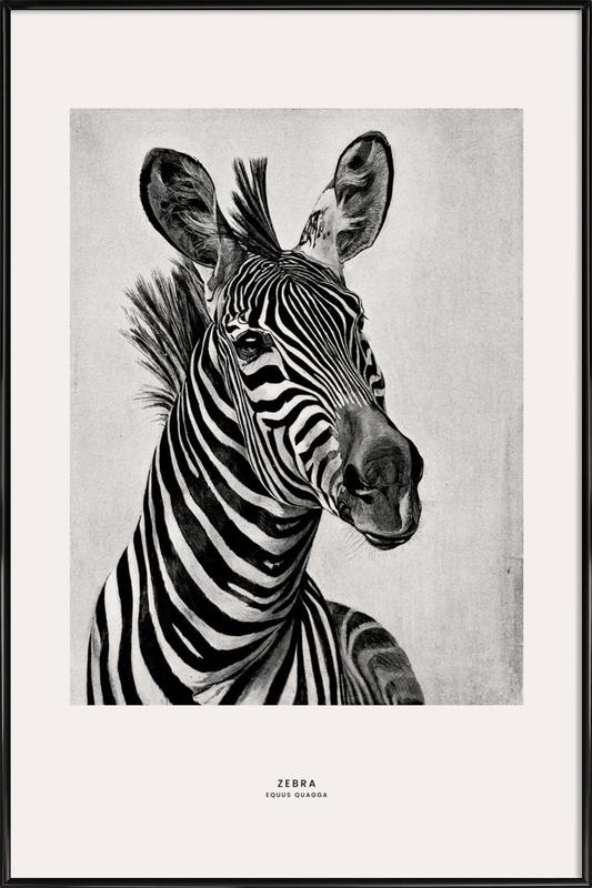 Zebra Portrait -Bild mit Kunststoffrahmen