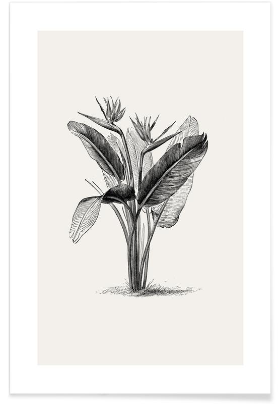 Crane Flower Poster