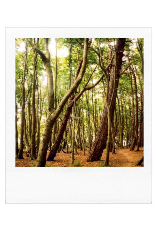 Forest Impression sur alu-Dibond
