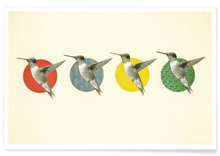 The hummingbird dance Poster